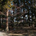 x-t3で撮影した大泉ヶ池の風景写真