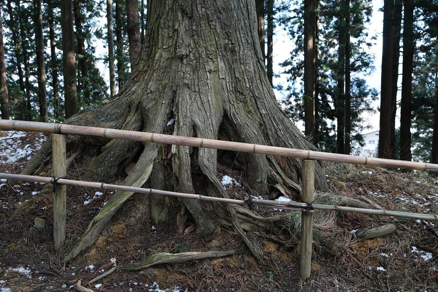 xt3のレビュー画質の評価中尊寺月見坂の冬の風景写真姥杉の根の風景