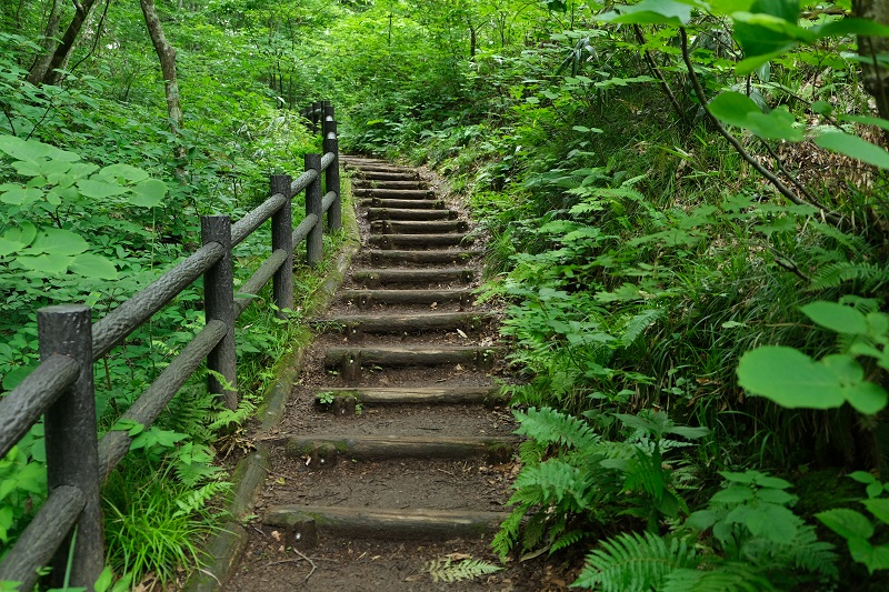 青池ブナの原生林に向かう階段