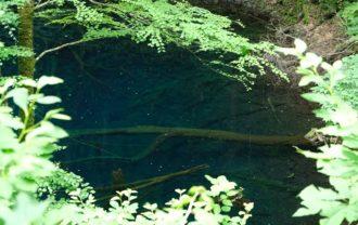 白神山地青池の写真