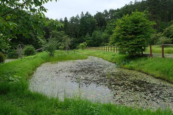 樹木葬知勝院の自然の風景写真