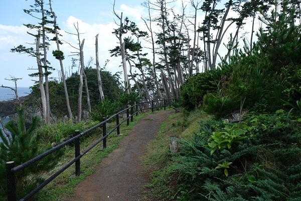 龍舞崎(たつまいざき)観光の遊歩道の写真