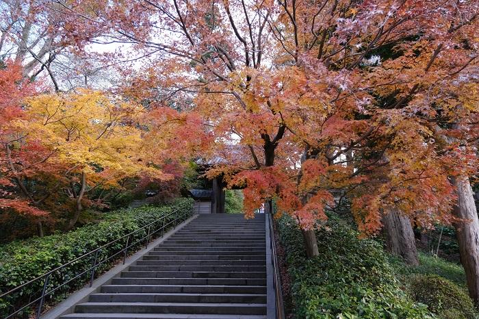 円覚寺の山門と紅葉